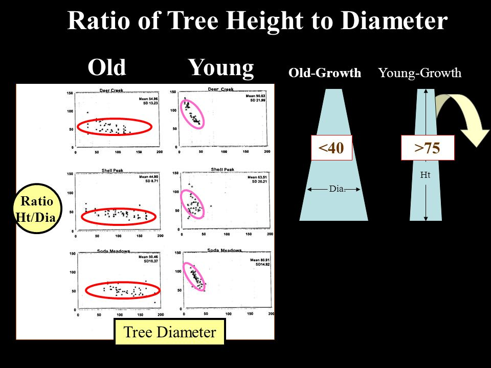 Ratio of Tree Height to Diameter Old-Growth Dia. Young-Growth Ht Ratio Ht/Dia.