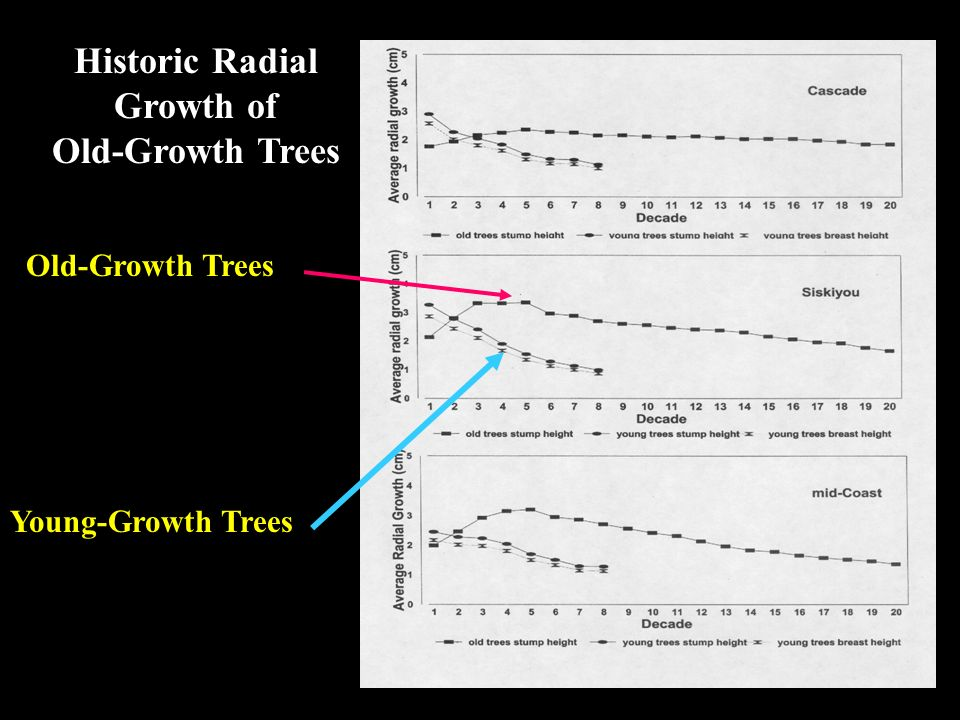 Old-Growth Trees Young-Growth Trees Historic Radial Growth of Old-Growth Trees