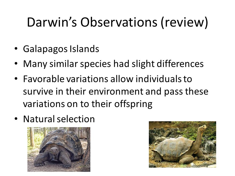 Darwin's Observations (review) Galapagos Islands Many similar species had slight differences Favorable variations allow individuals to survive in their environment and pass these variations on to their offspring Natural selection