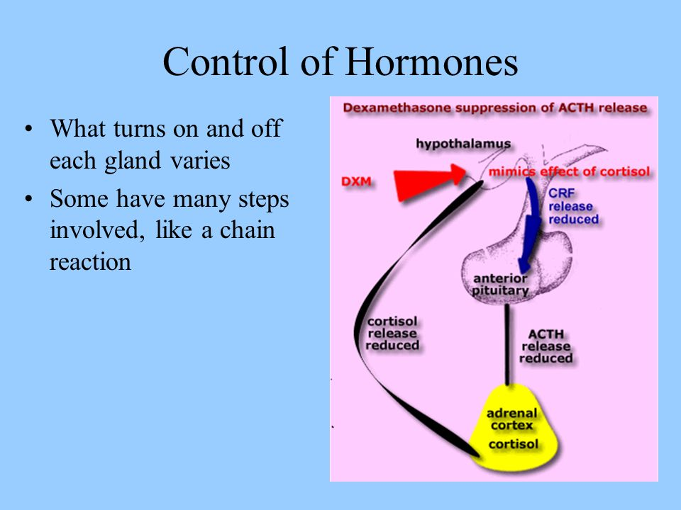 Control of Hormones If high levels of a hormone or product are detected, then the gland is inhibited (shut off) If low levels are detected, more must be needed, so the gland is not inhibited (allowed to turn on)