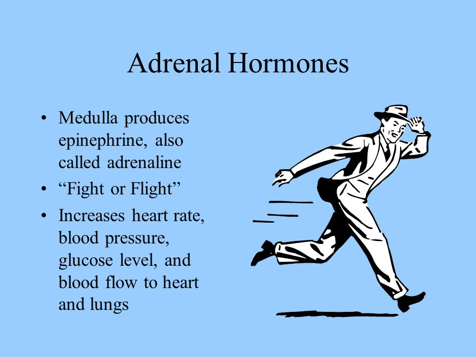 Adrenal Hormones Cortex also produces aldosterone Acts on kidney to increase uptake of sodium Essential for survival because of its role in water and solute balance