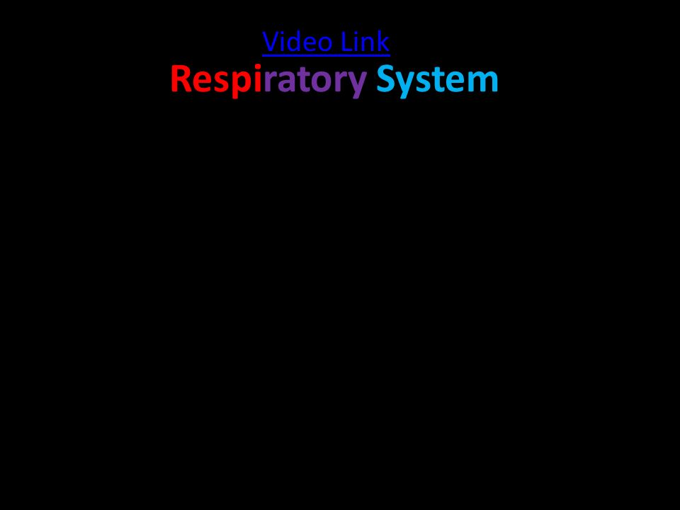 Respiratory System Video Link