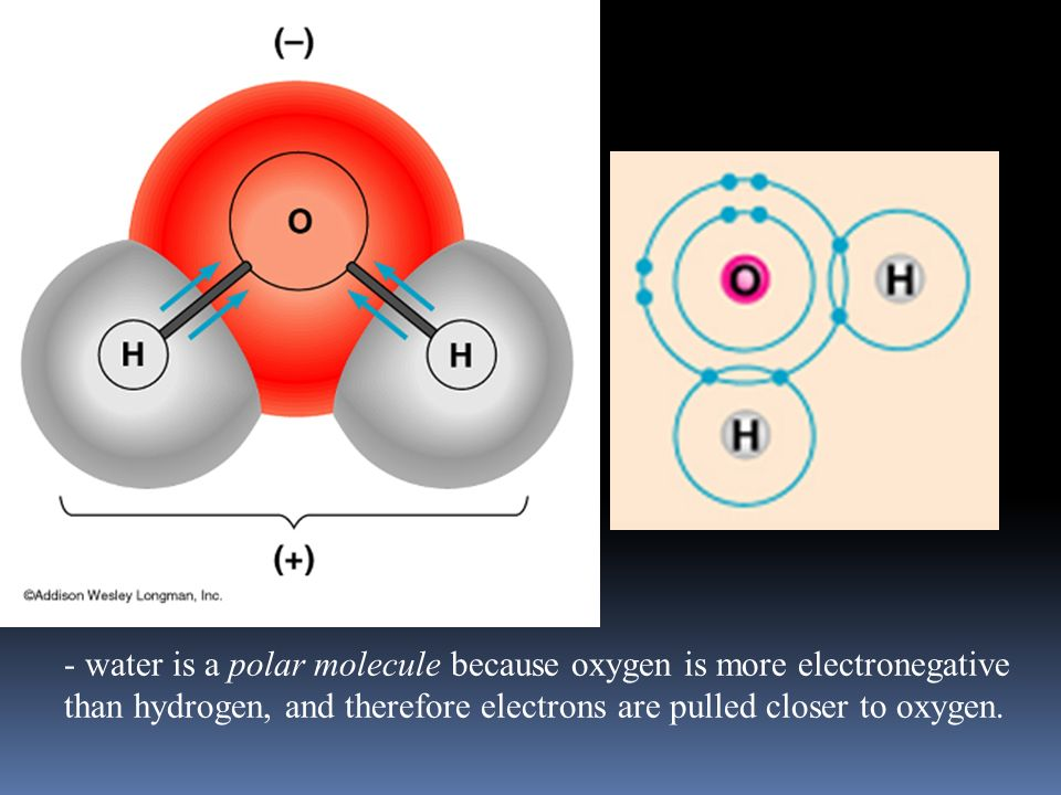 Polar express  Polar Molecule has a positive end and a negative end  This is caused by uneven sharing of electrons Nonpolar molecules do not have positive or negative ends- they share evenly