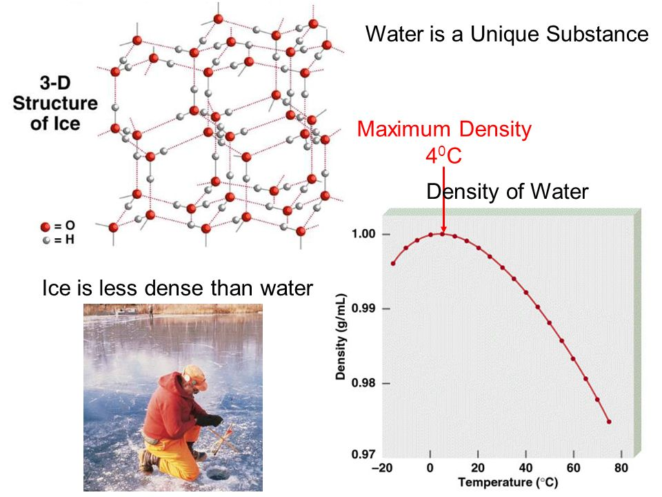 Maximum Density 4 0 C Ice is less dense than water Density of Water Water is a Unique Substance