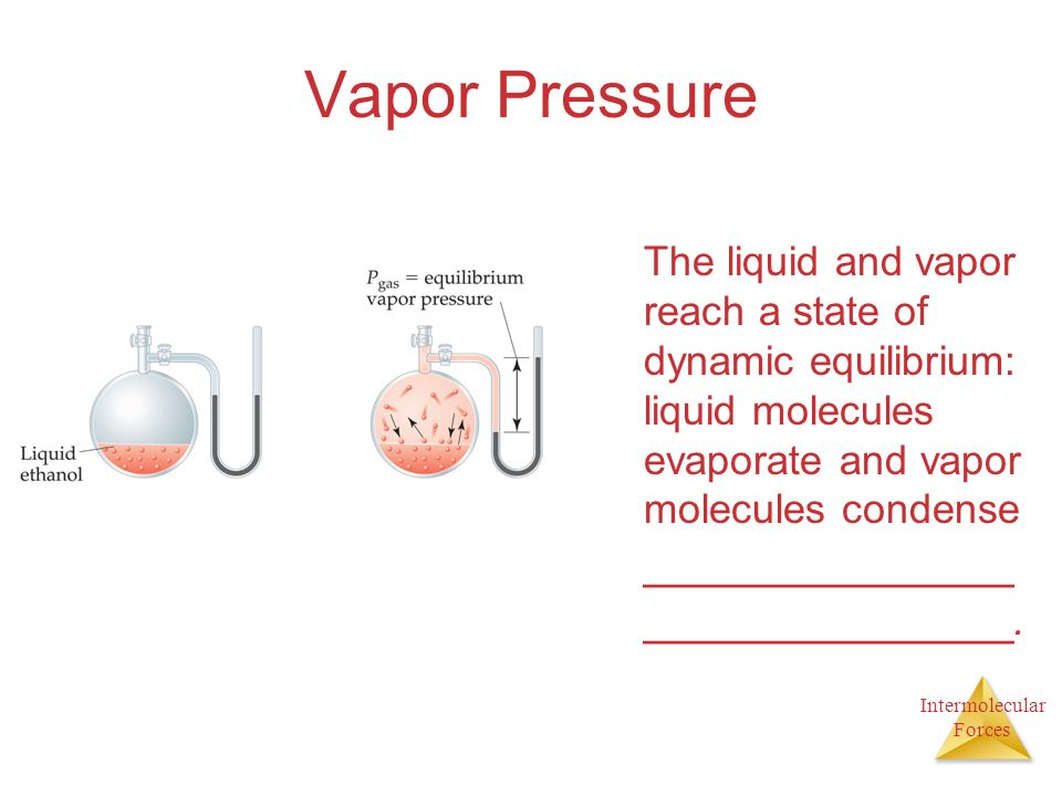 Intermolecular Forces Vapor Pressure The liquid and vapor reach a state of dynamic equilibrium: liquid molecules evaporate and vapor molecules condense ______________ ______________.