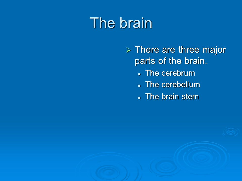 The brain  There are three major parts of the brain. The cerebrum The cerebellum The brain stem