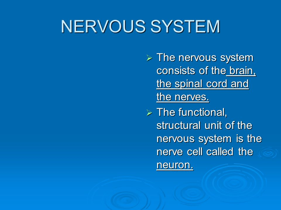 NERVOUS SYSTEM  The nervous system consists of the brain, the spinal cord and the nerves.
