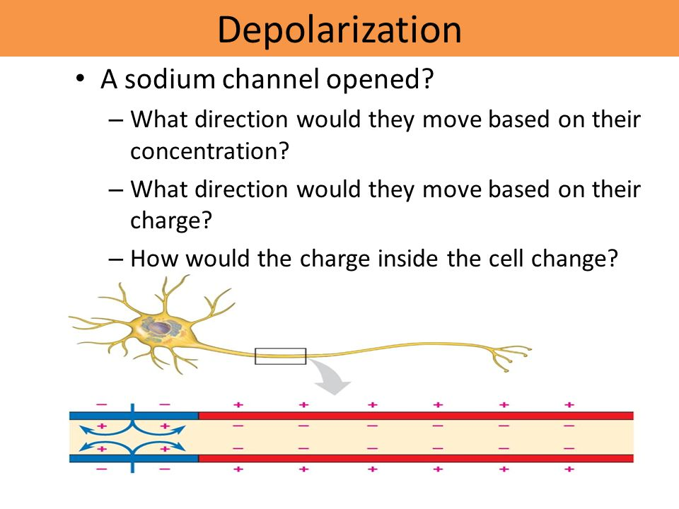Depolarization A sodium channel opened.