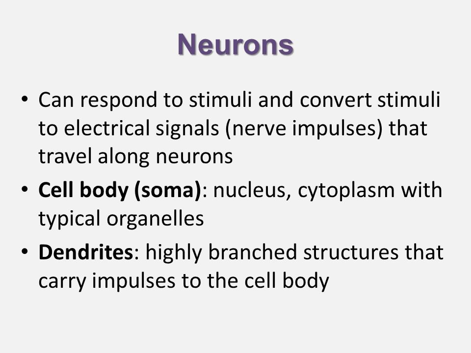 Neurons Can respond to stimuli and convert stimuli to electrical signals (nerve impulses) that travel along neurons Cell body (soma): nucleus, cytoplasm with typical organelles Dendrites: highly branched structures that carry impulses to the cell body