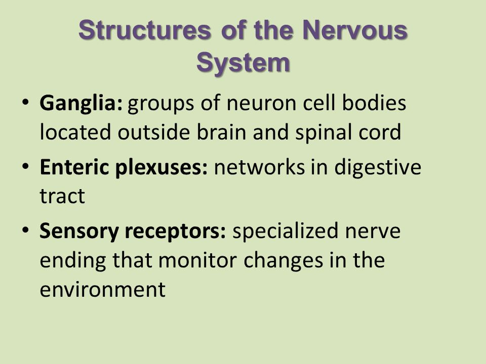 Structures of the Nervous System Ganglia: groups of neuron cell bodies located outside brain and spinal cord Enteric plexuses: networks in digestive tract Sensory receptors: specialized nerve ending that monitor changes in the environment