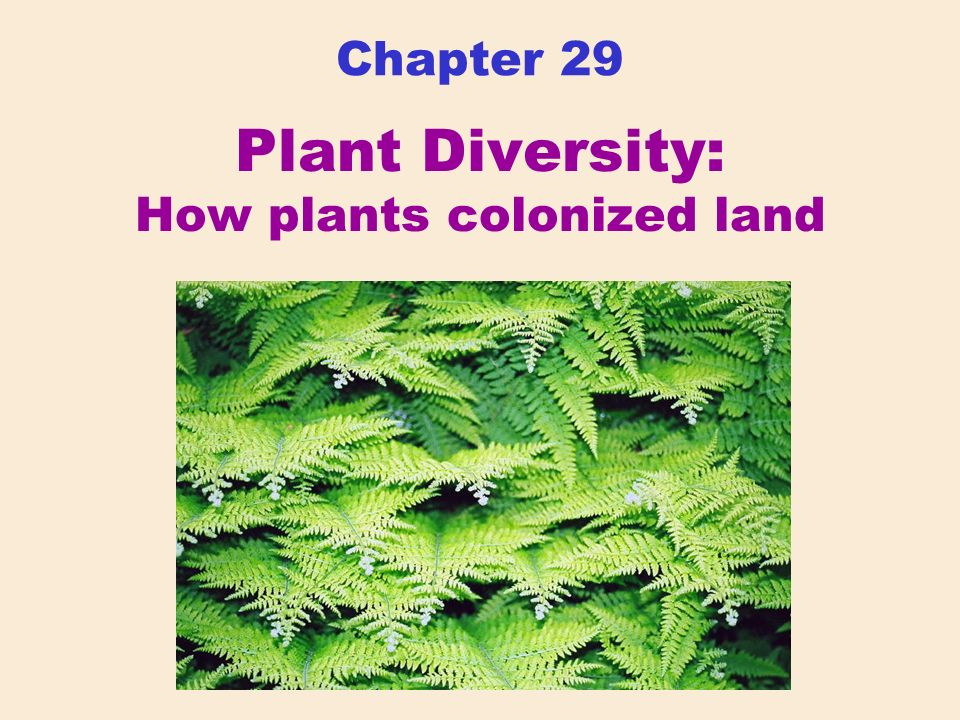 Chapter 29 Plant Diversity: How plants colonized land