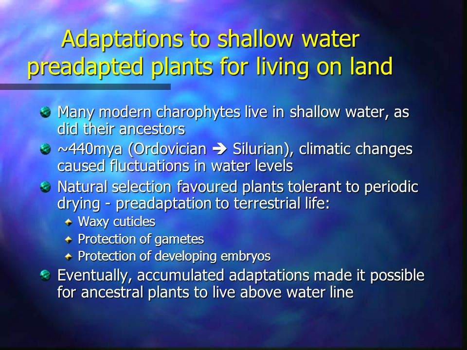 Adaptations to shallow water preadapted plants for living on land Many modern charophytes live in shallow water, as did their ancestors ~440mya (Ordovician  Silurian), climatic changes caused fluctuations in water levels Natural selection favoured plants tolerant to periodic drying - preadaptation to terrestrial life: Waxy cuticles Protection of gametes Protection of developing embryos Eventually, accumulated adaptations made it possible for ancestral plants to live above water line