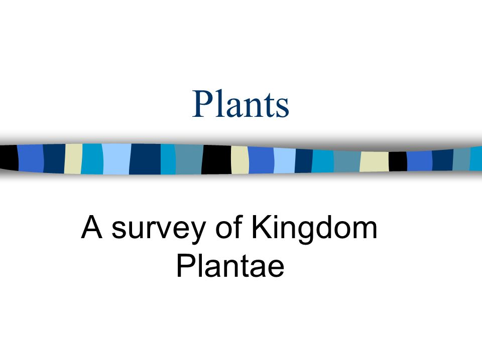 Plants A survey of Kingdom Plantae