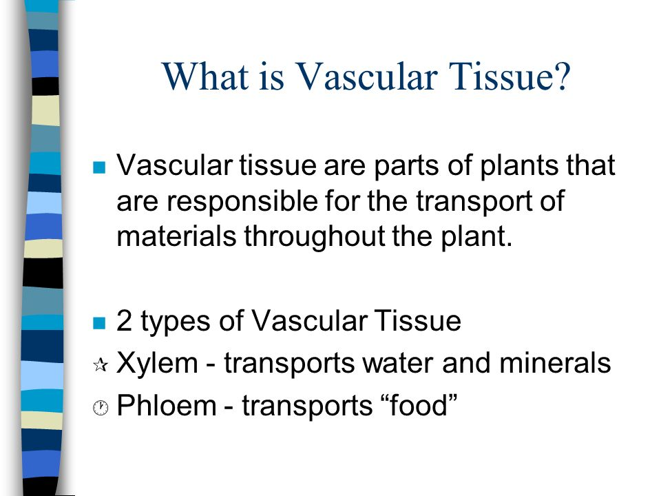 What is Vascular Tissue.