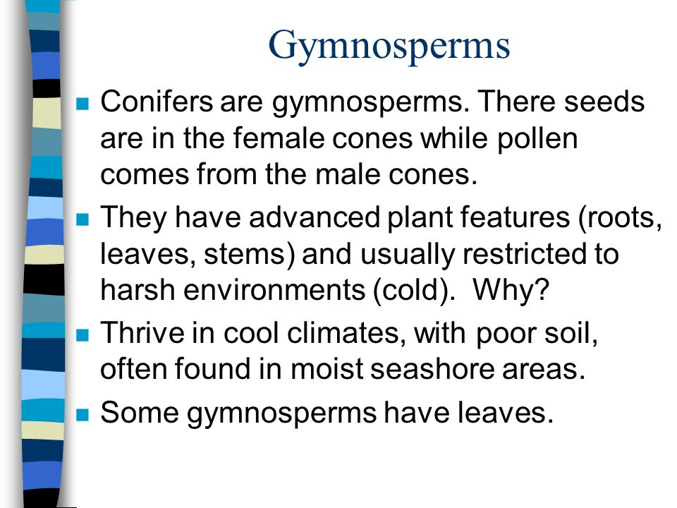 Gymnosperms n Conifers are gymnosperms.