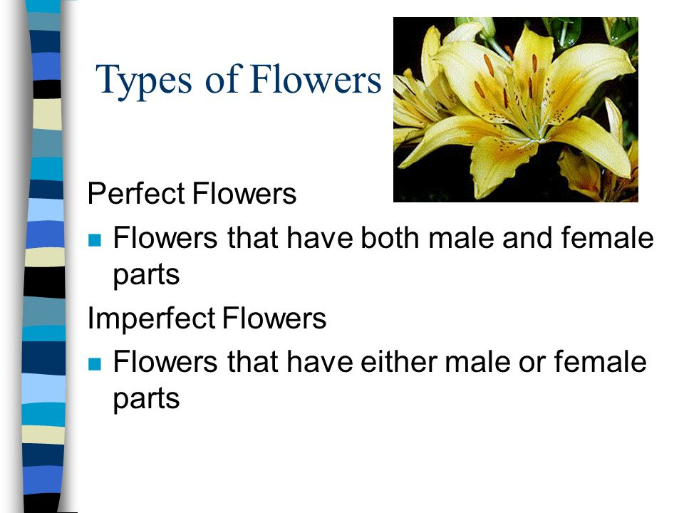 Types of Flowers Perfect Flowers n Flowers that have both male and female parts Imperfect Flowers n Flowers that have either male or female parts