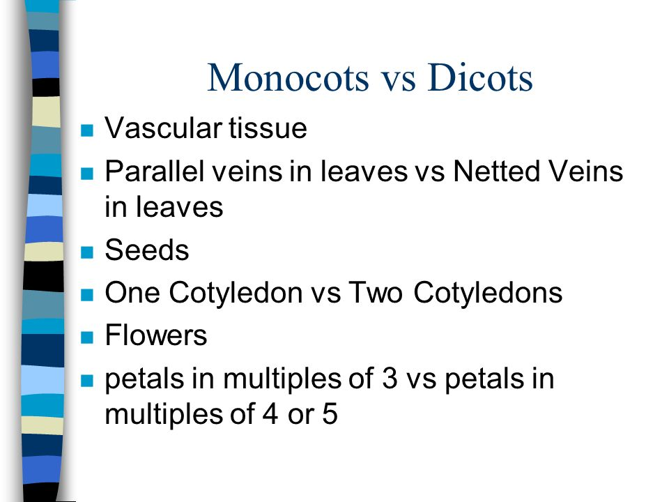 Monocots vs Dicots n Vascular tissue n Parallel veins in leaves vs Netted Veins in leaves n Seeds n One Cotyledon vs Two Cotyledons n Flowers n petals in multiples of 3 vs petals in multiples of 4 or 5