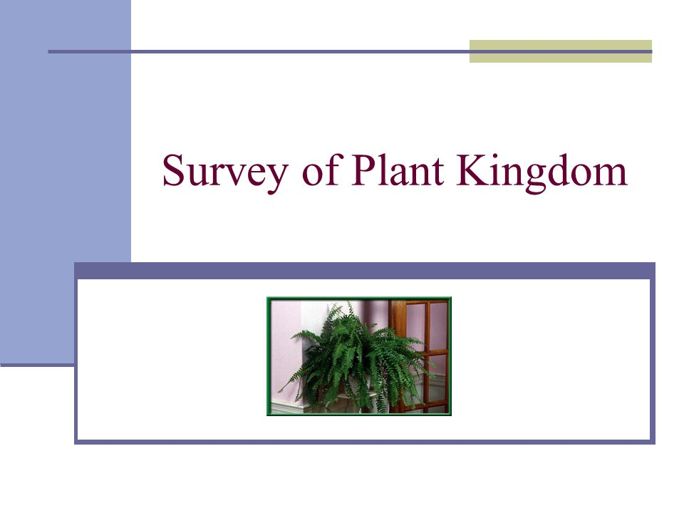 Survey of Plant Kingdom