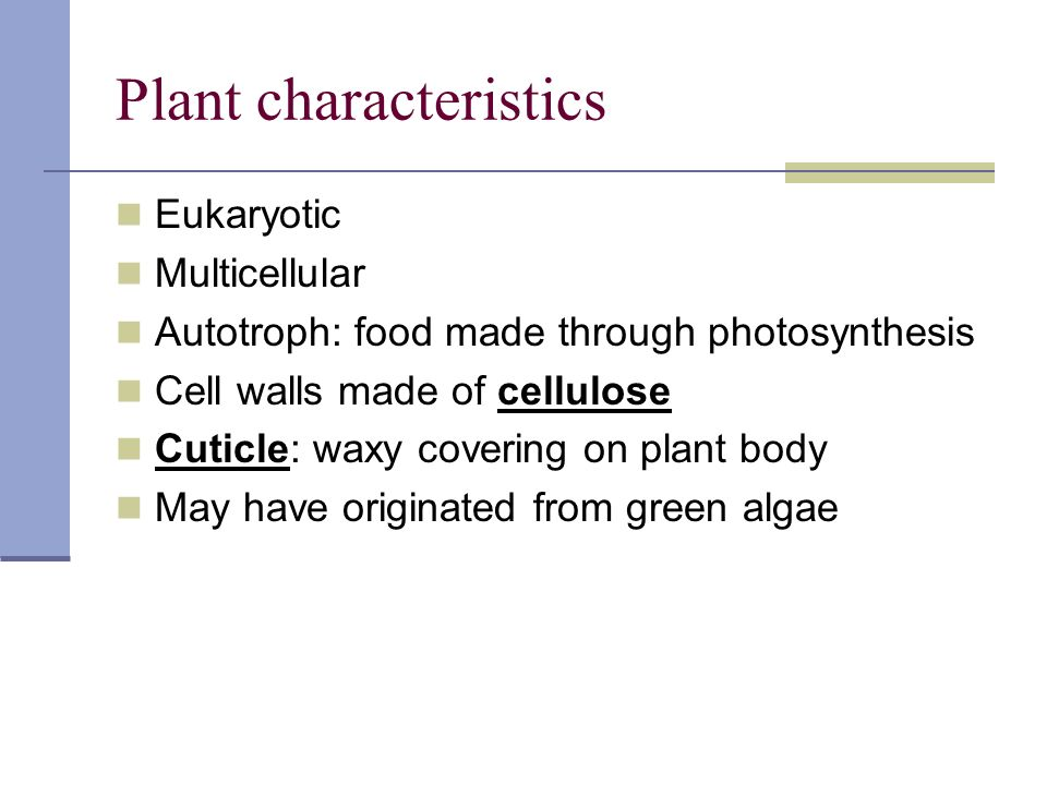 Plant characteristics Eukaryotic Multicellular Autotroph: food made through photosynthesis Cell walls made of cellulose Cuticle: waxy covering on plant body May have originated from green algae