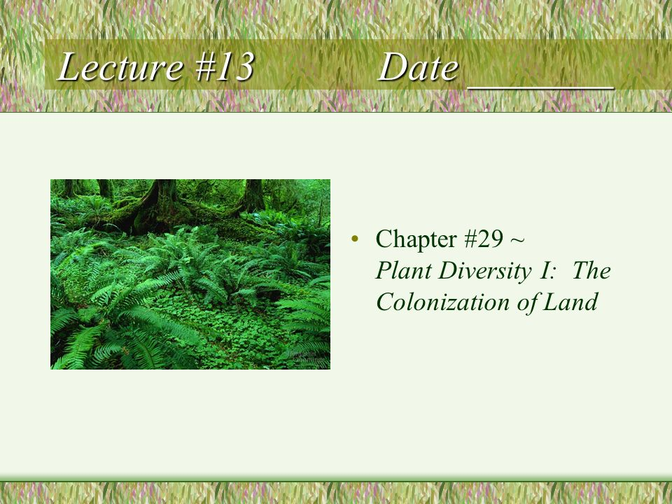 Lecture #13 Date _______ Chapter #29 ~ Plant Diversity I: The Colonization of Land
