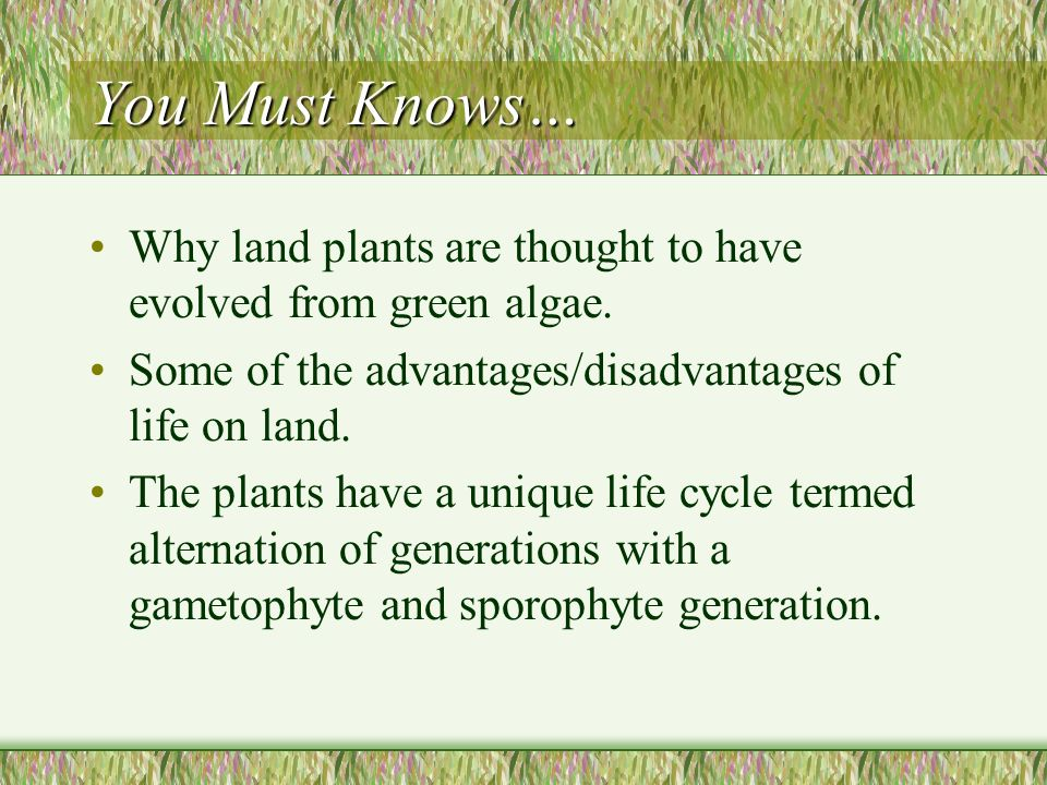 You Must Knows… Why land plants are thought to have evolved from green algae.