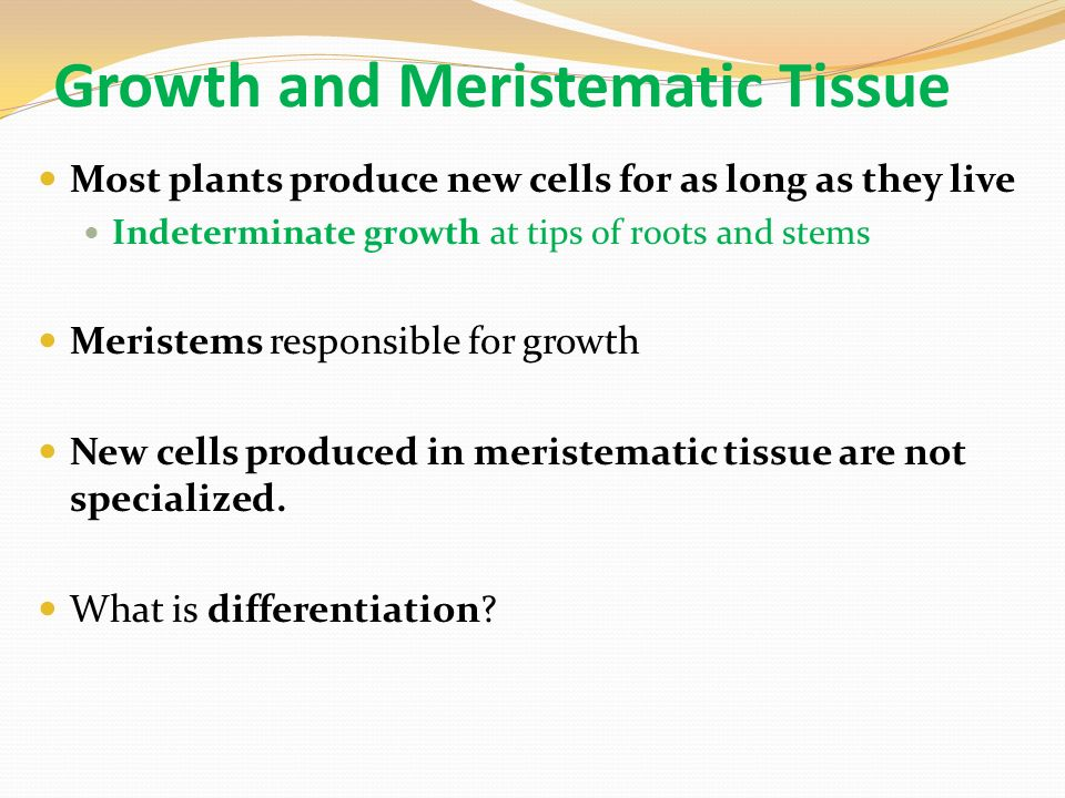 Growth and Meristematic Tissue Most plants produce new cells for as long as they live Indeterminate growth at tips of roots and stems Meristems responsible for growth New cells produced in meristematic tissue are not specialized.