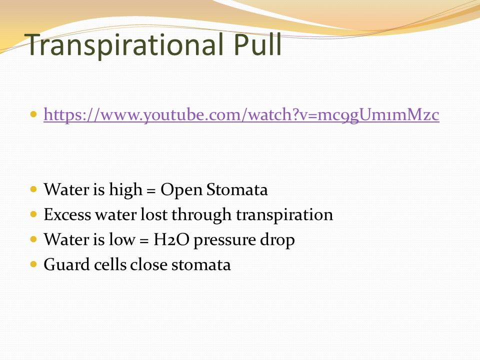 Transpirational Pull   v=mc9gUm1mMzc Water is high = Open Stomata Excess water lost through transpiration Water is low = H2O pressure drop Guard cells close stomata