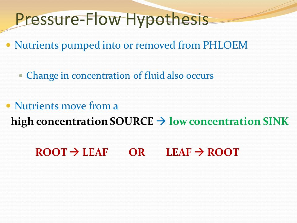 Pressure-Flow Hypothesis Nutrients pumped into or removed from PHLOEM Change in concentration of fluid also occurs Nutrients move from a high concentration SOURCE  low concentration SINK ROOT  LEAF OR LEAF  ROOT