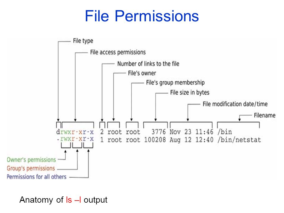 File Permissions Anatomy of ls –l output