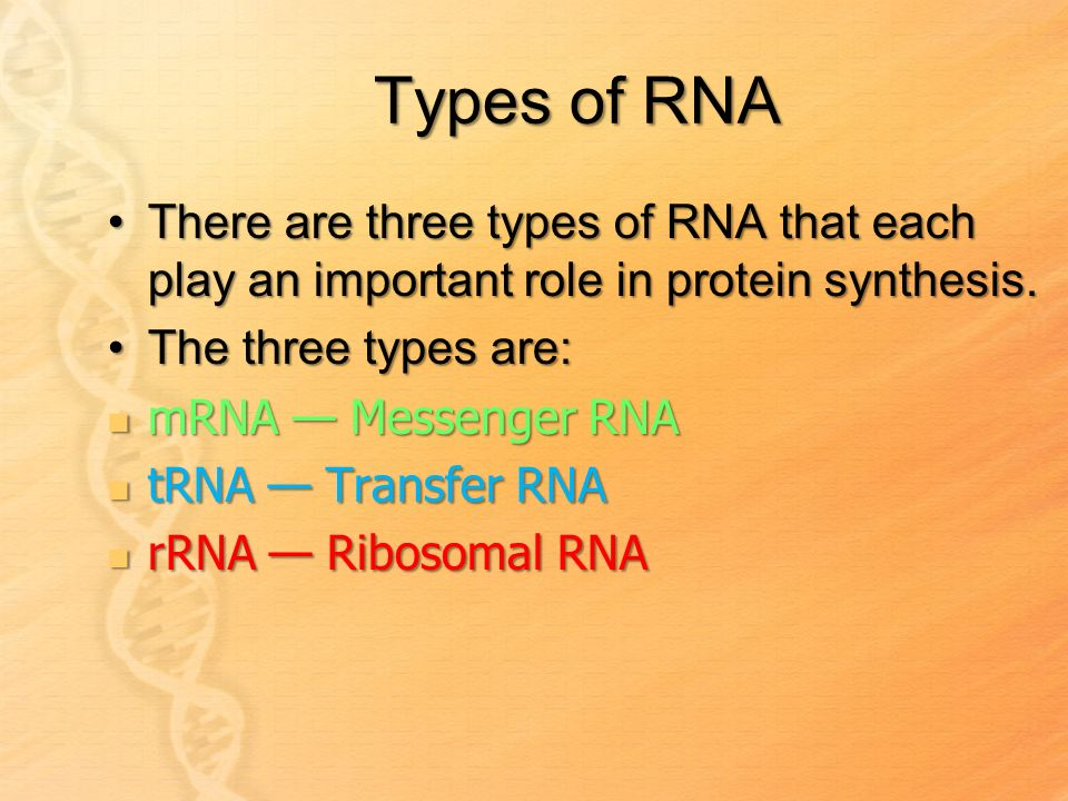 Analyse the role of RNA during protein synthesis?