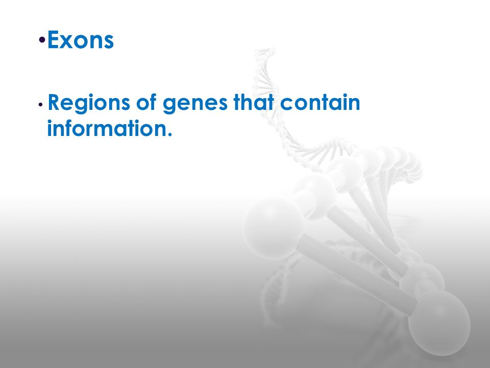 Exons Regions of genes that contain information.