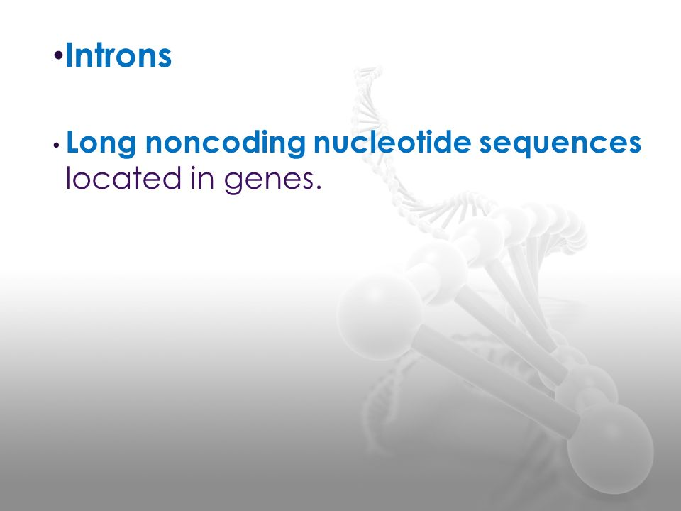 Introns Long noncoding nucleotide sequences located in genes.