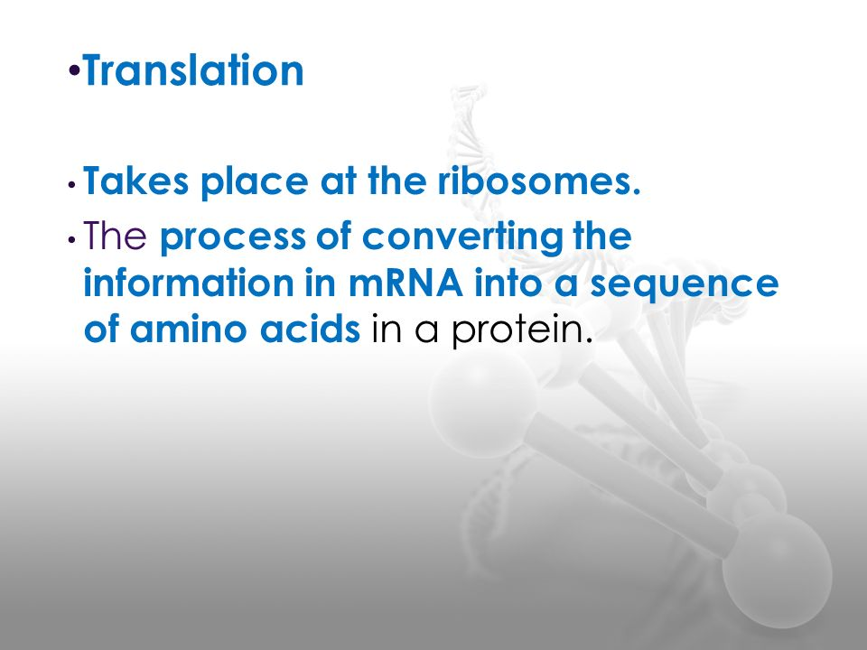 Translation Takes place at the ribosomes.