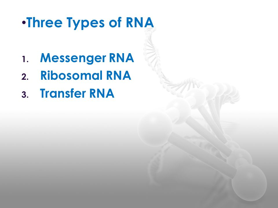 Three Types of RNA 1. Messenger RNA 2. Ribosomal RNA 3. Transfer RNA