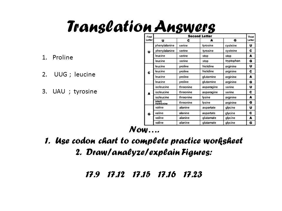Dna translationtranscription practice worksheet answers