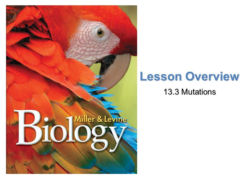 Lesson Overview Lesson OverviewMutations Lesson Overview 13.3 Mutations