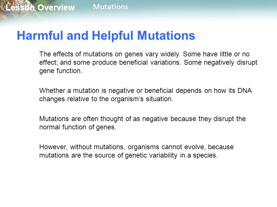 Lesson Overview Lesson OverviewMutations Harmful and Helpful Mutations The effects of mutations on genes vary widely.