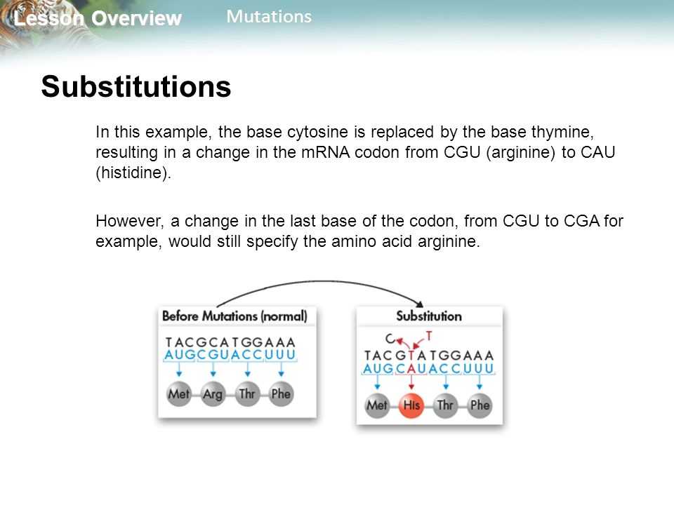 Lesson Overview Lesson OverviewMutations Substitutions In this example, the base cytosine is replaced by the base thymine, resulting in a change in the mRNA codon from CGU (arginine) to CAU (histidine).