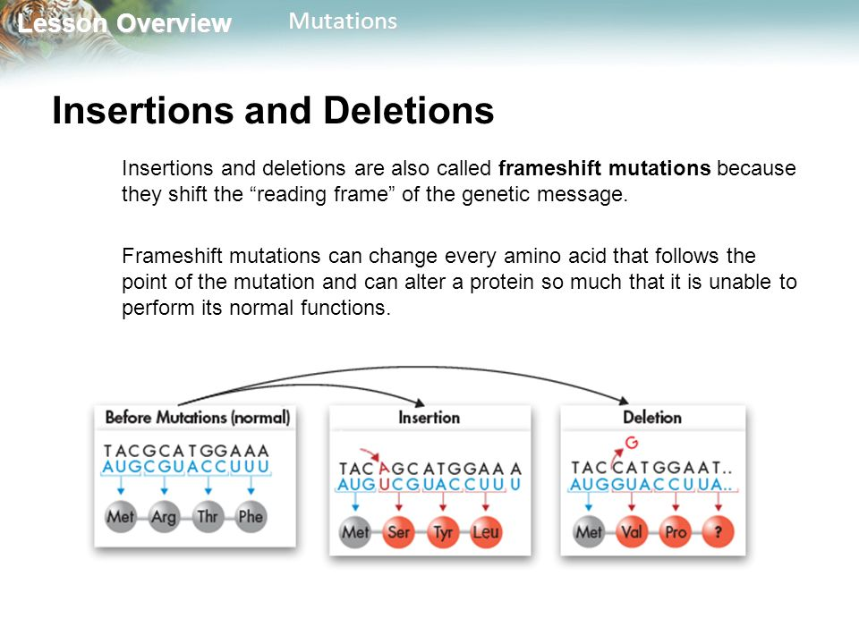 Lesson Overview Lesson OverviewMutations Insertions and Deletions Insertions and deletions are also called frameshift mutations because they shift the reading frame of the genetic message.
