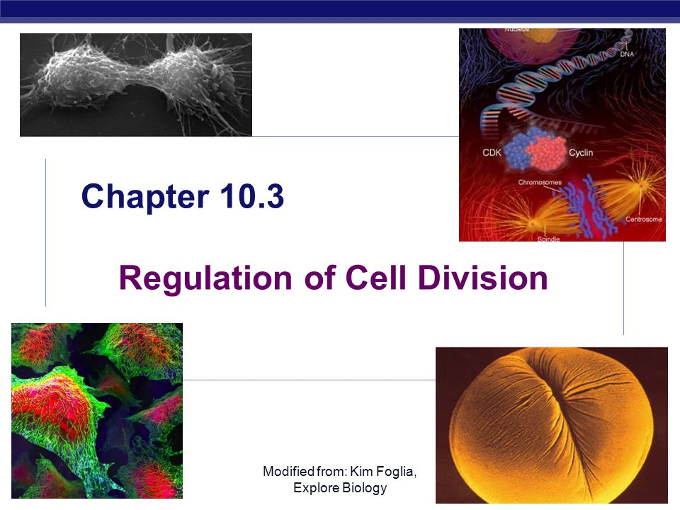 AP Biology Modified from: Kim Foglia, Explore Biology Chapter 10.3 Regulation of Cell Division
