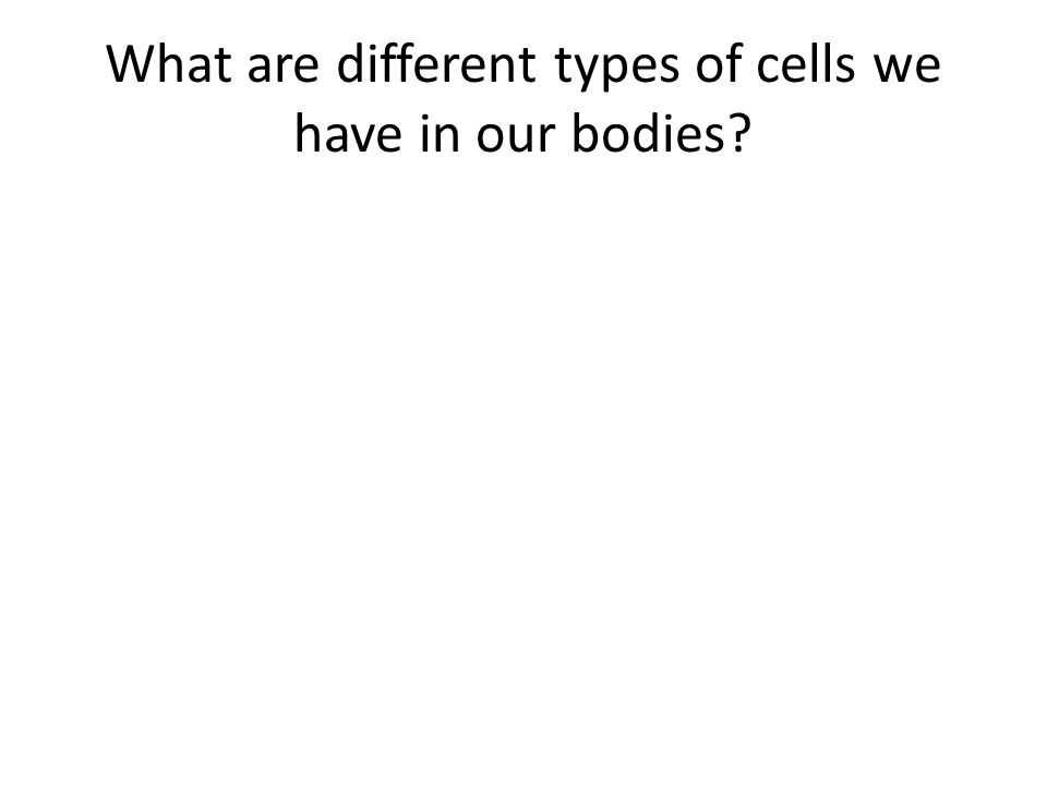 What are different types of cells we have in our bodies