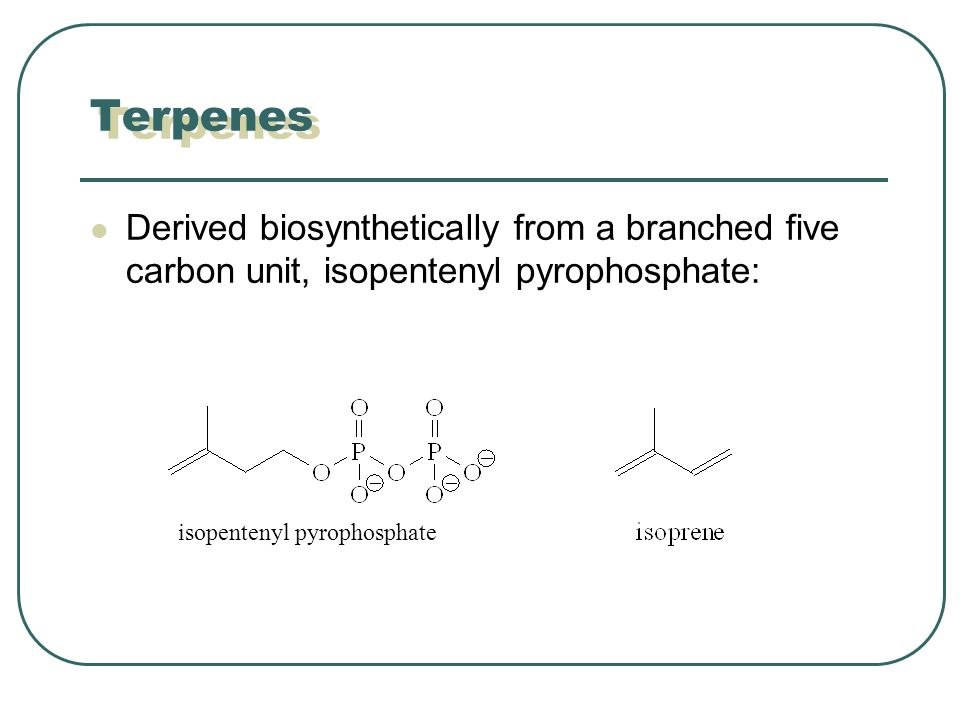 Terpenes Derived biosynthetically from a branched five carbon unit, isopentenyl pyrophosphate: isopentenyl pyrophosphate