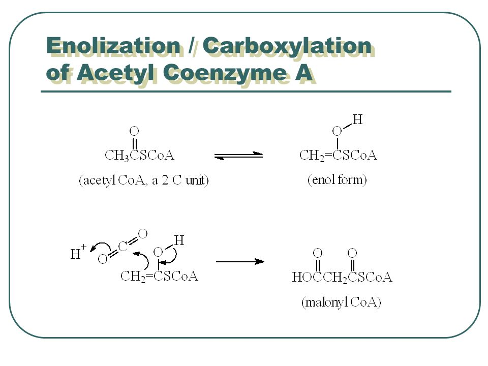 Enolization / Carboxylation of Acetyl Coenzyme A
