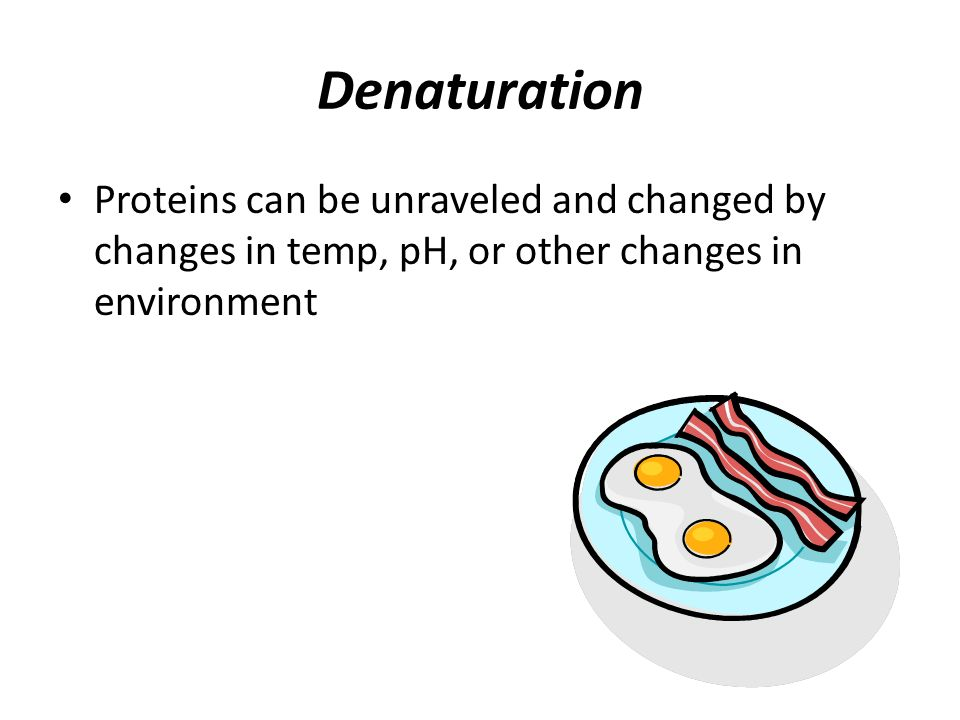 Denaturation Proteins can be unraveled and changed by changes in temp, pH, or other changes in environment