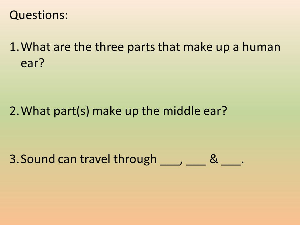 Questions: 1.What are the three parts that make up a human ear.