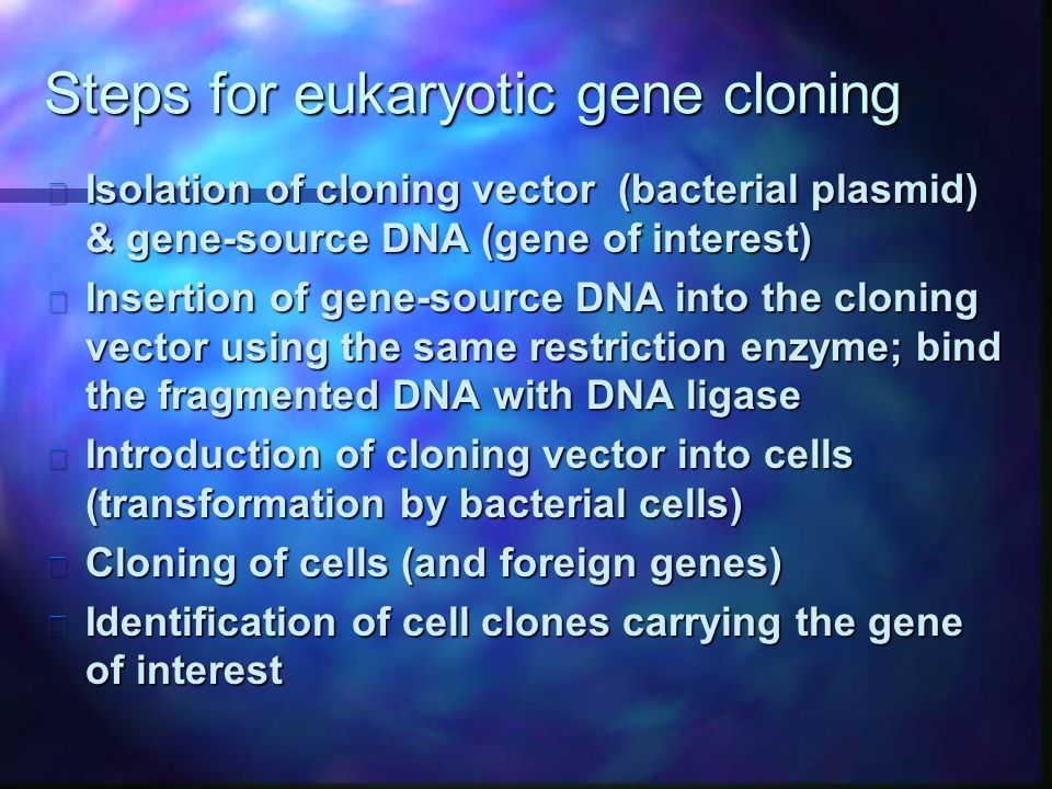 Steps for eukaryotic gene cloning n Isolation of cloning vector (bacterial plasmid) & gene-source DNA (gene of interest) n Insertion of gene-source DNA into the cloning vector using the same restriction enzyme; bind the fragmented DNA with DNA ligase n Introduction of cloning vector into cells (transformation by bacterial cells) n Cloning of cells (and foreign genes) n Identification of cell clones carrying the gene of interest