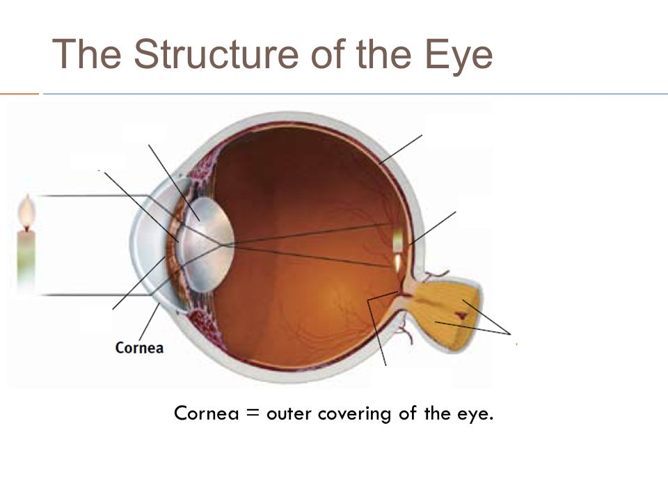 Vision use the following ppt to take notes on the structure of 6 cornea outer covering of the eye ccuart Image collections