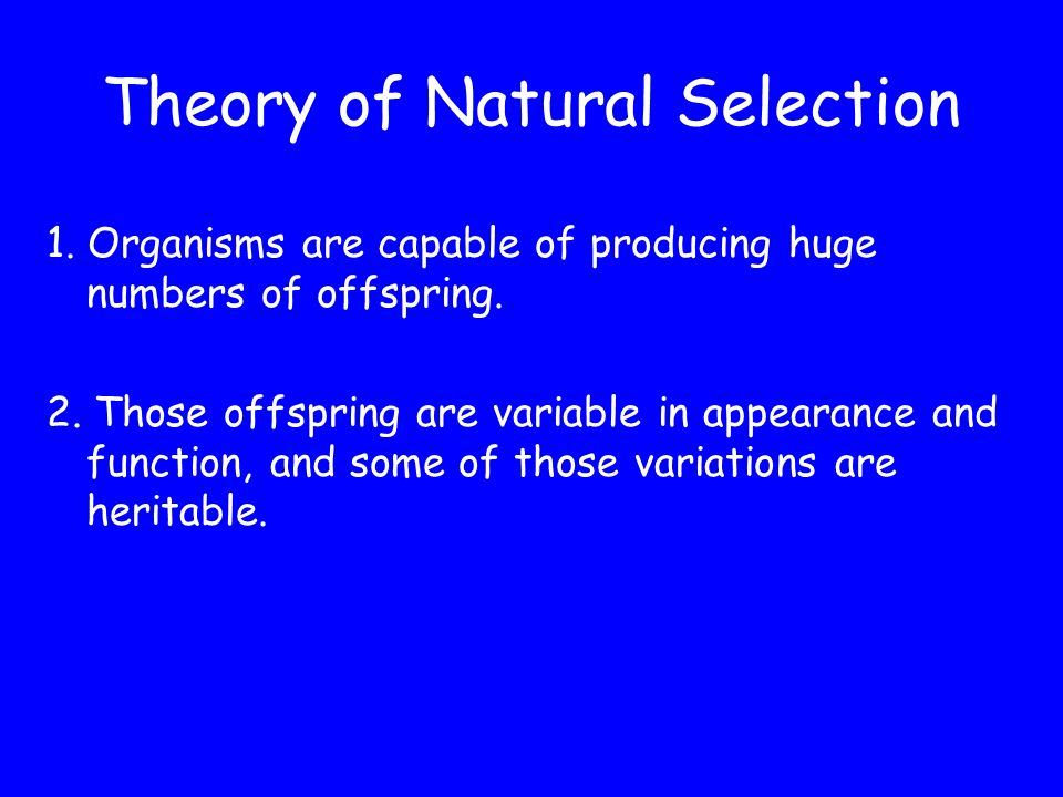 SO WHAT IS THIS THEORY OF NATURAL SELECTION It can be broken down into four basic tenets, or ideas