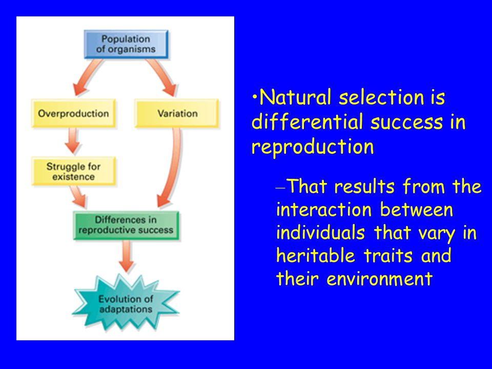 Theory of Natural Selection 3.