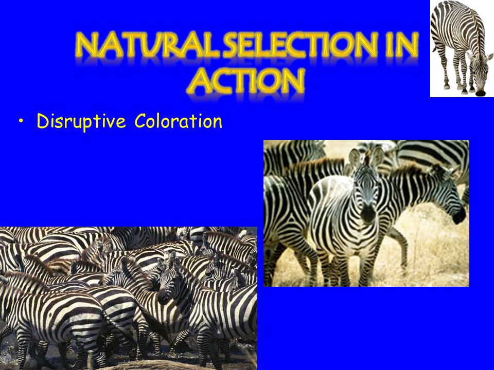 Warning Coloration (Aposematic coloration)